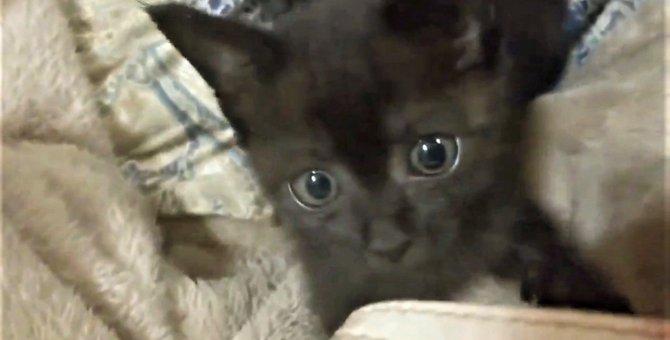 冷たい雨に打たれうずくまっていた瀕死の子猫。奇跡の生還に涙