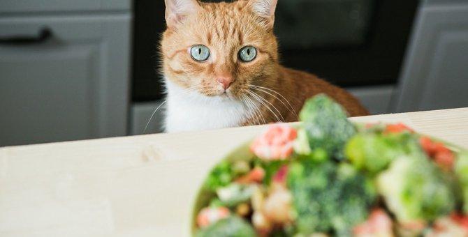 猫にレタスを食べさせても大丈夫?含まれる栄養と正しい与え方