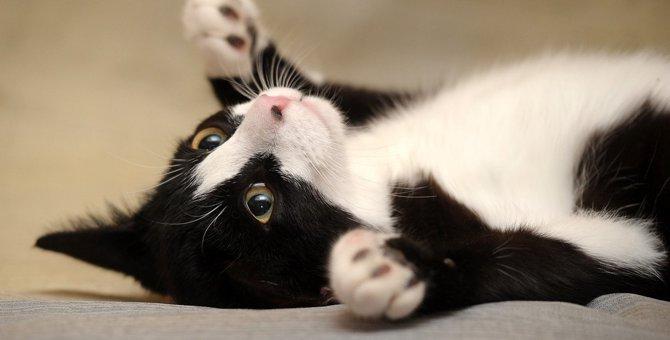 『お腹を見せている猫』は触ってもOK?絶対しちゃダメな触り方3つ