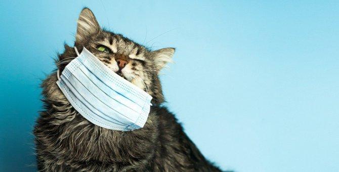【新型コロナ】三密を避けられない職場…愛猫のために仕事を休むべき?