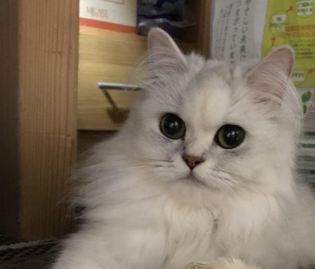 猫に好かれる人ってどんな人?