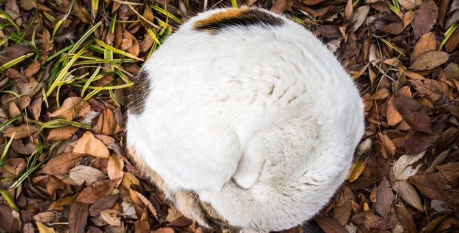 猫が丸くなる5つの理由とその気持ち