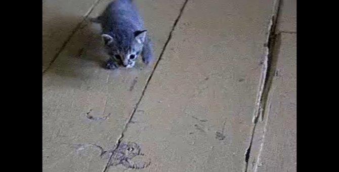 「この床、ちょっと滑りすぎにゃ」ツルツルの床に悪戦苦闘する子猫たち