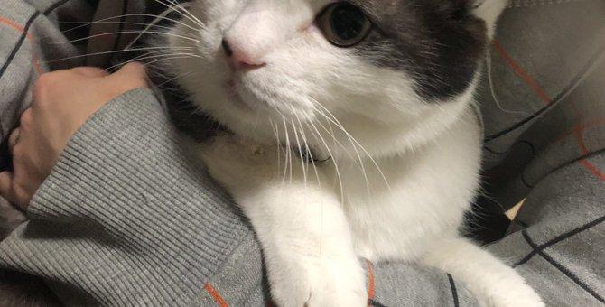 猫は人の言葉が解る?見失った子猫の居場所を先輩猫に聞いてみた時の話