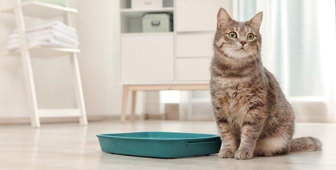 猫に最適なトイレの場所とは?気をつけたい4つのこと