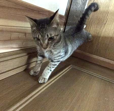 「もう開けられニャイ」ドアノブを交換して、鍵を設置!猫がドアを勝手に開けないようにする方法