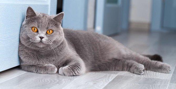 猫を「立ち入り禁止」にするべき場所3つ
