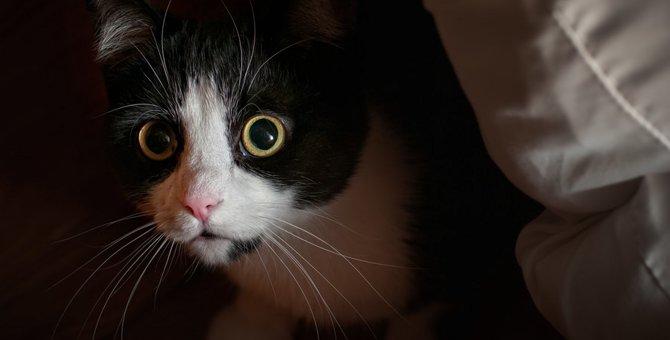 猫が飼い主を待ち伏せする2つの心理