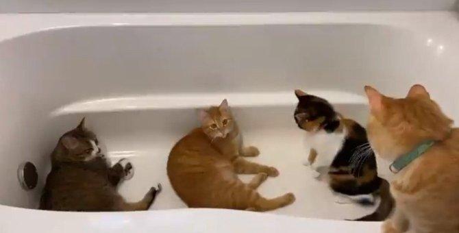 満員御礼!浴室暖房の虜になった猫達が集うパラダイスバスが話題!