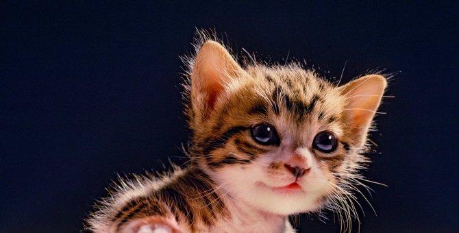 猫が『愛情を深めたい』ときにするアピール5選♡上手に応える方法とは?