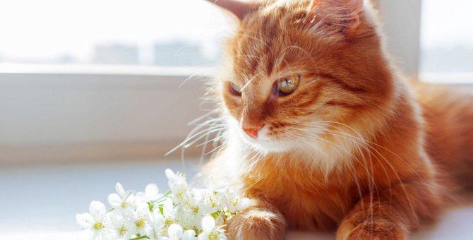 猫の介護に必要な5つの事柄と、続けていくコツ