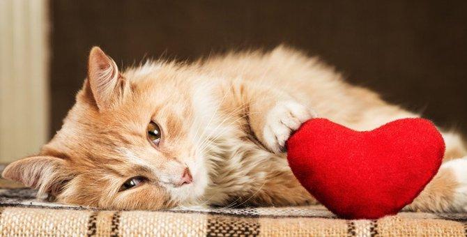 猫が好きな人にしか言わない秘密の鳴き方5選