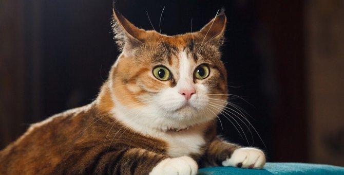 猫が唾を飲むような仕草をする4つの理由