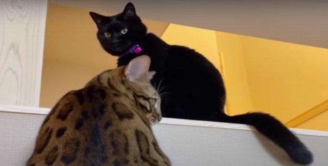 強引に絡んで怒られてしまった猫さん!