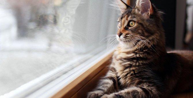 猫同士の接触に注意!『猫白血病ウイルス感染症』の症状と予防法