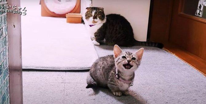 短足猫さんたちの個性あふれるモーニングルーティン!