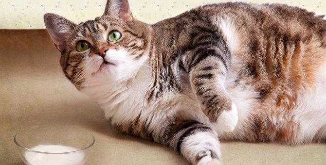 愛猫の肥満を防ごう!
