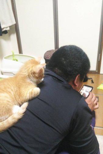 猫が抱きつきたくなる飼い主の特徴5つ