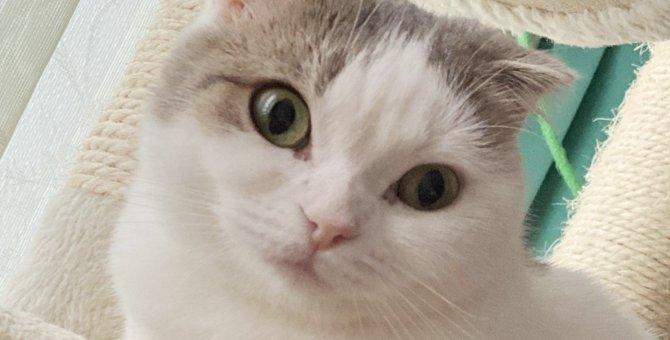 研究によって判明?猫は人間に愛着を持っていた!