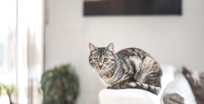 猫が『助けて欲しいとき』に見せる仕草5選