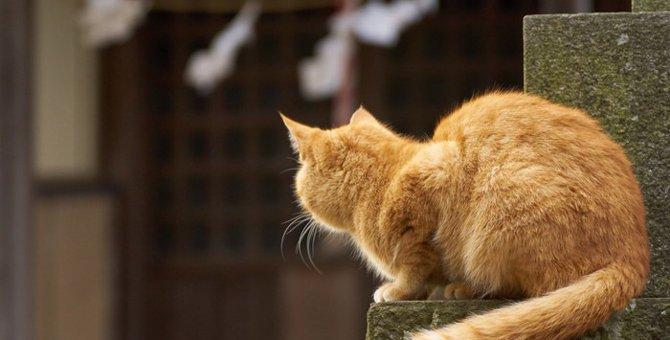 猫神社が出来た理由と都内での場所について