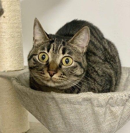 猫の『毛色』ごとの性格8選!今すぐ愛猫の毛色をチェックしてみて♡