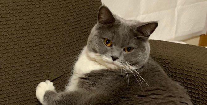 お見事!わがままダイニャマイトボディへと成長を遂げた猫に驚き♡
