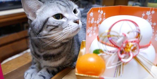 鏡餅の準備に参加したい猫ちゃん♡