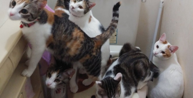 【大人気】意外な人気スポット!?猫の大渋滞が発生中♡