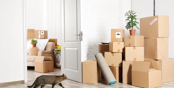 引越し先でできる猫への配慮6つ