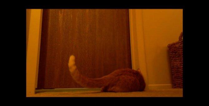 びよよーん!毎朝猫ちゃんがする変わった飼い主の起こし方