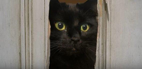 【コラ映画猫】アウルキティの「シャイニング」。この恐怖に耐えられるか
