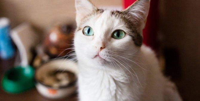 猫のための『終活』いつから何を考えるべき?