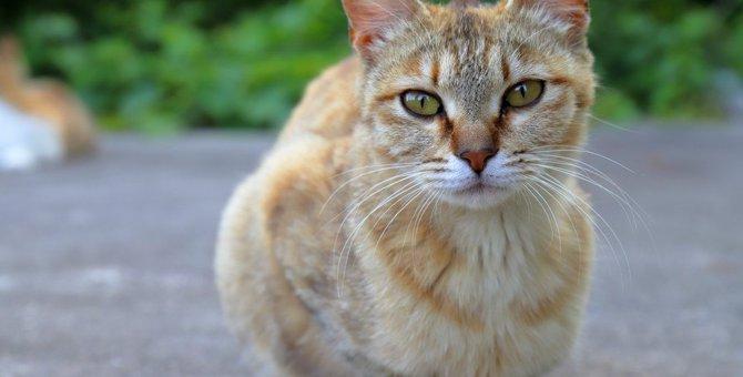 猫の毛艶が良くない原因とその対処法3つ