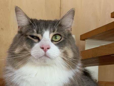 猫が嫌いな人に絶対しない仕草や行動5つ