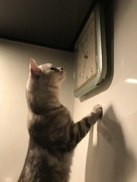 猫は時計が読める?体内時計が正確な理由4つ