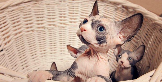 壇蜜さんも猫好き芸能人!名前や種類、エピソード