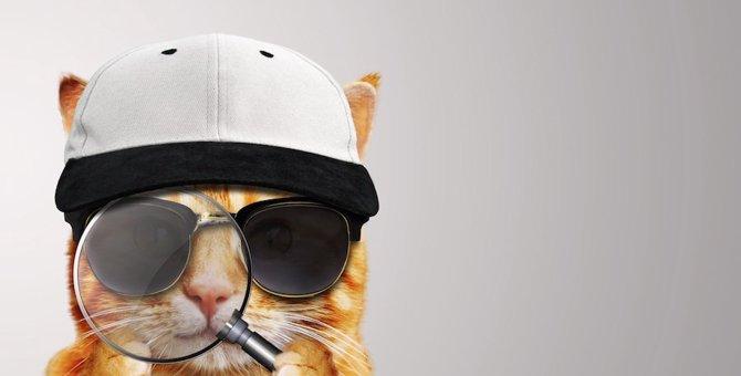 猫はなぜ隠したものを見つけられる?3つの理由