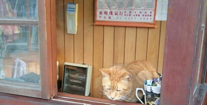 台湾にある猫の村「猴硐(ホウトン)」に行ってきました!