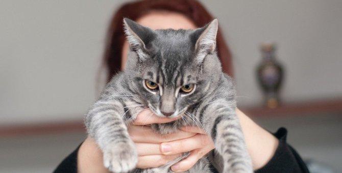 心を許していない猫がする行動4つ