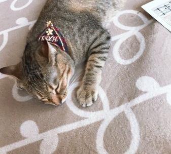 猫が怯えている時の仕草や行動5つ
