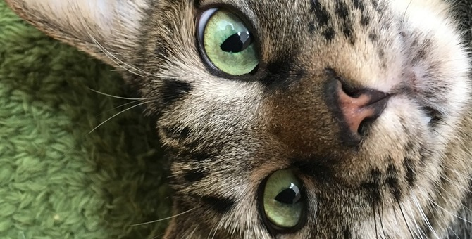 猫の嗅覚ってどのくらい?ニオイを嗅ぐ能力やその意味について