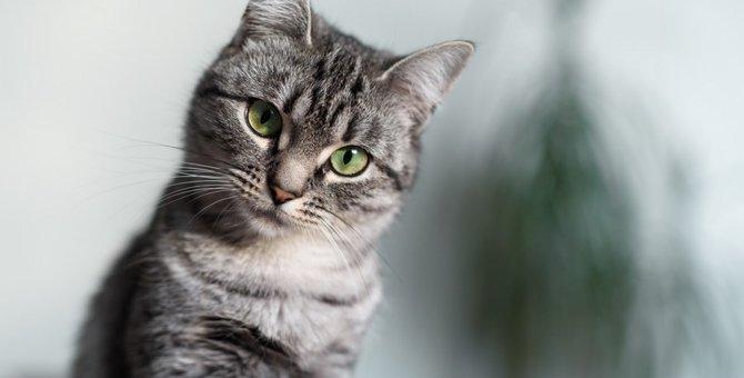 『借りてきた猫』の意味とは その言葉の由来と使い方