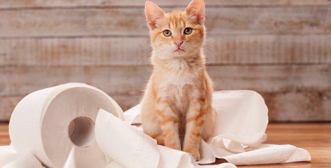 「猫の逆襲」をくらう飼い主の行動3つ