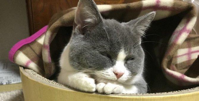 暖房の季節到来!猫のいる部屋で絶対注意すべき湿度管理のポイント5つ