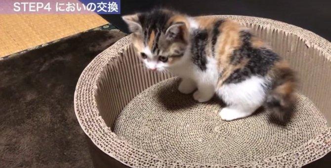 いよいよ中盤!新入り猫と先住猫の顔合わせのための『プロセスその3』