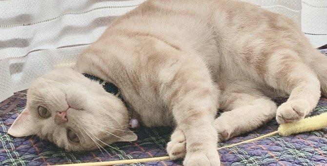 猫が『最高に幸せだニャ〜♡』と感じる3つの環境