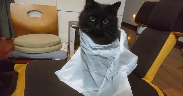 猫が『ビニール袋』を好む4つの理由