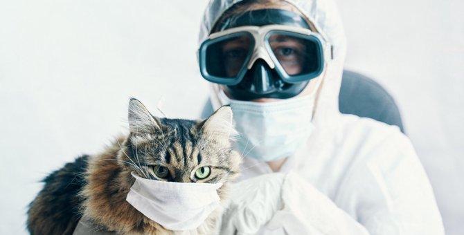 猫に致命的なダメージを与える有害物5つ