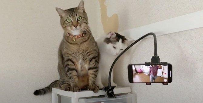 カメラが気になる猫さん!まるで映画監督?